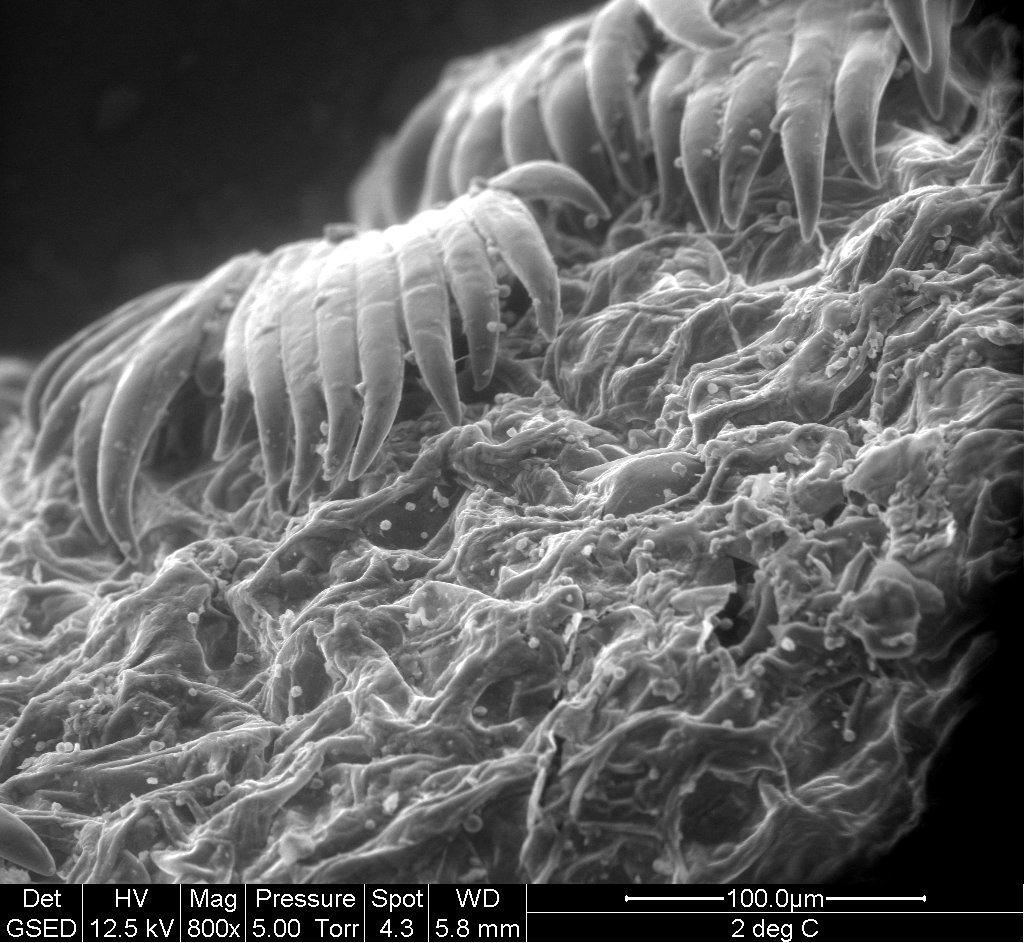 II° Corso microscopia elettronica e confocale in ambito botanico