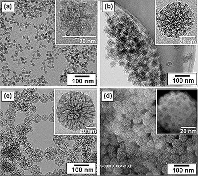 Corso Base integrato di microscopia confocale e microscopia elettronica TEM/STEM-3
