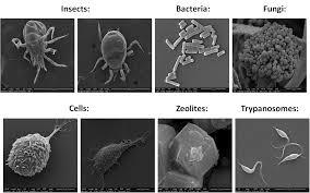 Corso Base integrato di microscopia confocale e microscopia elettronica SEM/S(T)EM-1