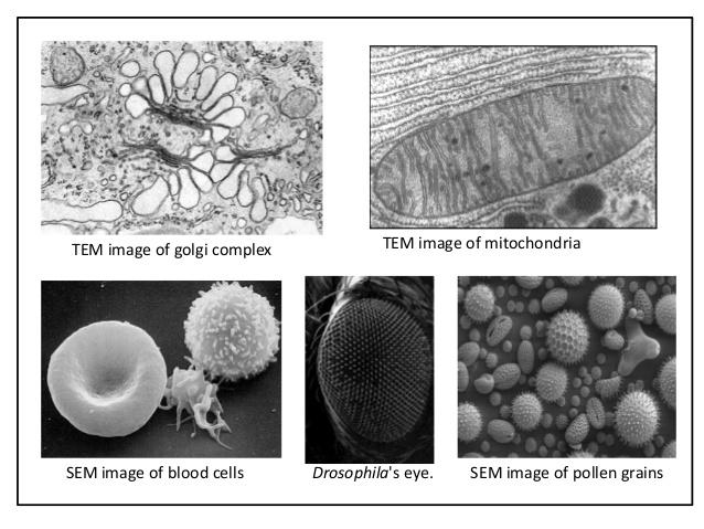 Corso Base integrato di microscopia confocale e microscopia elettronica SEM/S(T)EM-2