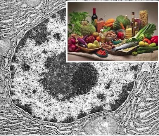 Microscopia e Imaging negli alimenti e nella nutraceutica